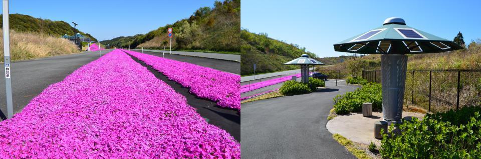 東海ソーラー発電所と芝桜
